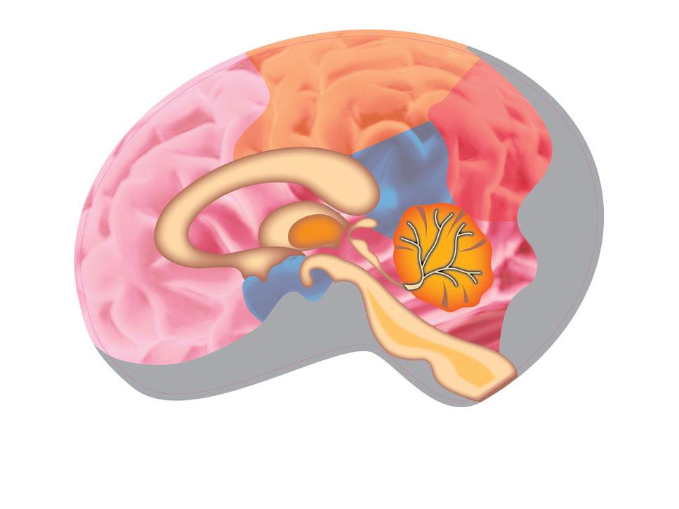癫痫诱发因素
